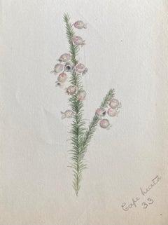 Fine Antique British Botannical Plant Watercolour Painting, circa 1900's