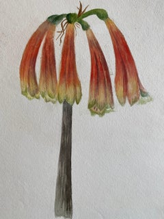 Fine Antique British Botannical Watercolour Painting, circa 1900's