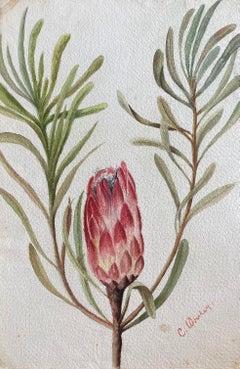 Fine Antique British Botannical Watercolour Painting, circa 1900's Pink & Green