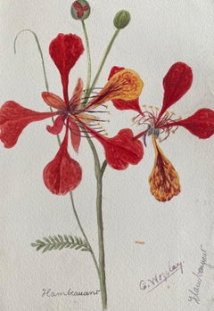 Fine Antique British Botannical Watercolour Painting, circa 1900's Red Flowers