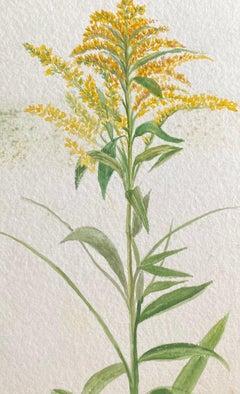Fine Antique British Botannical Watercolour Painting, circa 1900's - Yellows