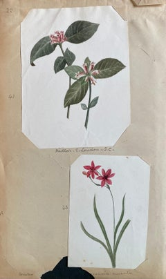 Set Of Two Fine Antique British Botannical Watercolour Paintings, circa 1900's