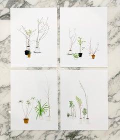 """House Plants (Suite of 4)"" minimal plants greenery modern"
