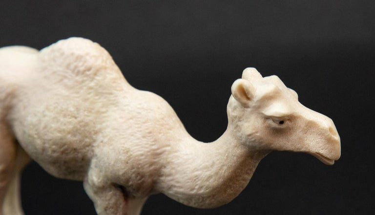 Carved moose antler camel. Detailed moose antler carving of a camel, from Indonesia. This is a one of a kind object. The moose antler was sourced in North America and then sent to Asia for carving. Quality of ivory, but with sustainability, as the