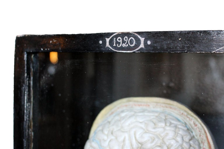 19th Century Carved Scientific Display by A. Nicholas For Sale
