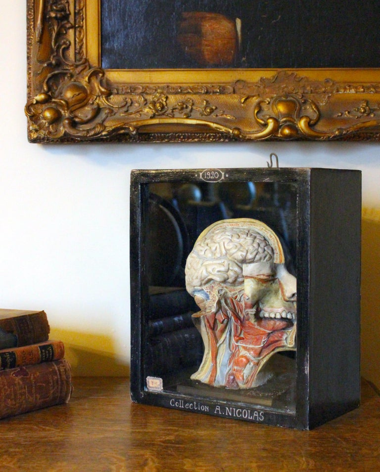 Wood Carved Scientific Display by A. Nicholas For Sale