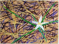 """Star Lily in Ponderosa in Pine Needles,"" Mixed Media by Catherine Holmburg"