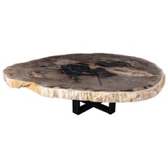 Center of Coffee Table, Natural Circular Shape, Petrified Wood with Metal Base