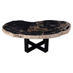 Center or Coffee Table, Natural Circular Shape, Petrified Wood with Metal Base