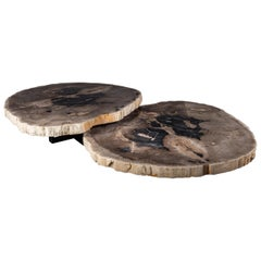 Pair of Petrified Wood Center or Coffee Table with black Metal Base