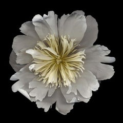 No. 18 (Framed Flower Still Life Photograph of a White Peony on Black)