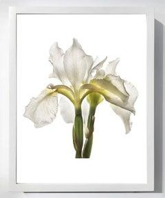 No. 31 & No. 115 (Two Framed Still Life Photographs of Botanicals)