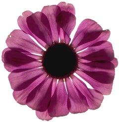 Untitled Flower #02