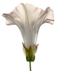 Untitled Flower # 112