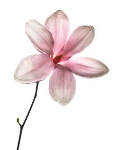 Untitled Flower # 113