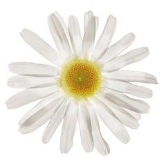 Untitled Flower #18