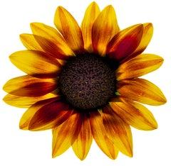 Untitled Flower # 93
