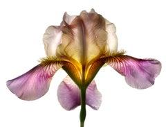 Untitled Flower # 94