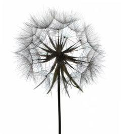 Untitled Flower # 98