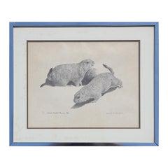 Naturalistic Texas Black Tailed Prairie Dog Black and White Animal Print