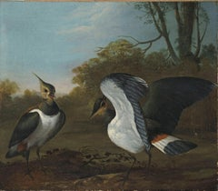 Lapwings in a landscape