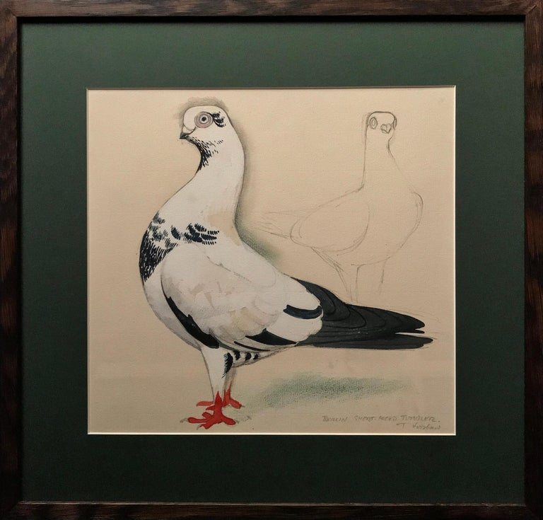 Charles Frederick Tunnicliffe Animal Painting - A Berlin short-faced tumber pigeon