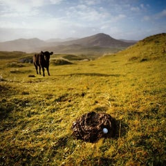 7th Hole Cow Dung Hazard, Ed 1/45