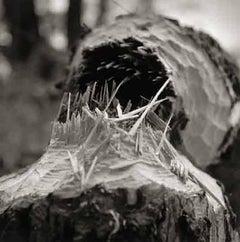 Beaver Fall, Ed. 1/15