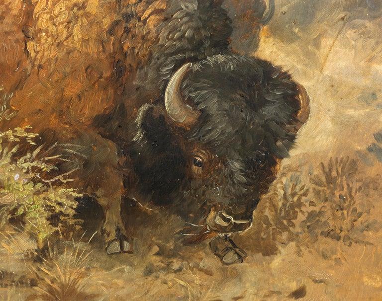 Cascade Buffalo Hunt For Sale 2