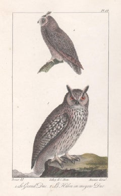 'Le Grand Duc - Le Hibou ou moyen Duc', Owls, French bird lithograph print, 1832