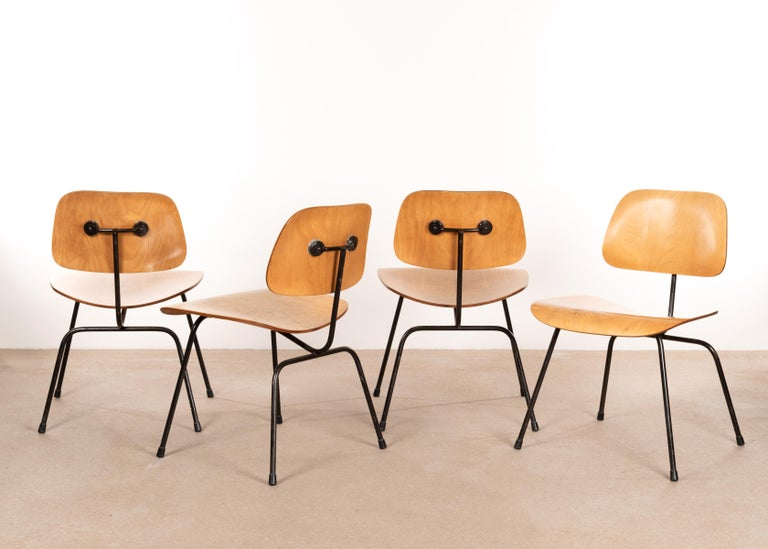 Iconic and early 1950s DCM side chair set in maple veneer plywood. Good or fair vintage condition with full black enameled steel frames. All chairs have date stamps (June 1953) and embossed DCM tag. The chairs have been light restored in the past.