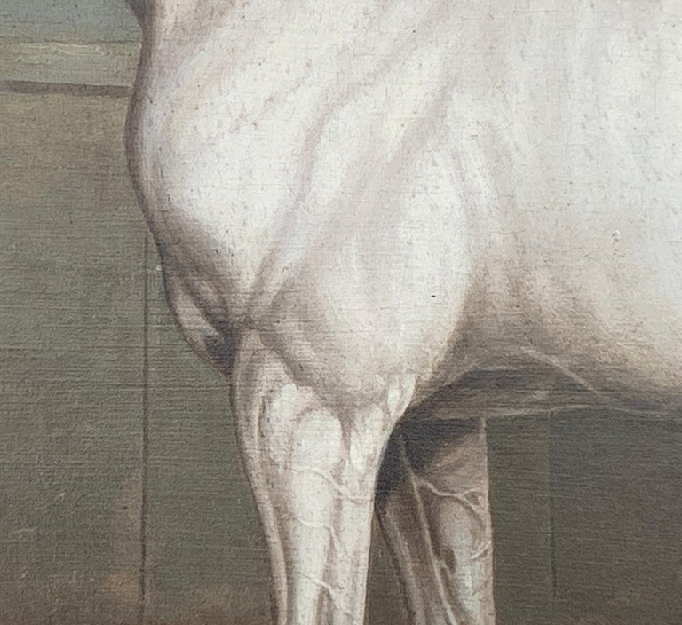 19th century English portrait of a White/grey hunter in a stable For Sale 2
