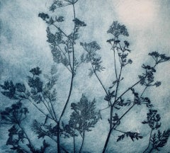 Charlie Davies, Delicate Cowparsley, Limited Edition Floral Etching Print