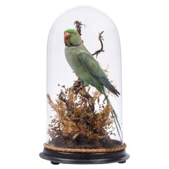 Charming Victorian Taxidermy Dome with Ring-Necked Parakeet