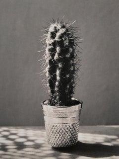 Cactus, Madrid