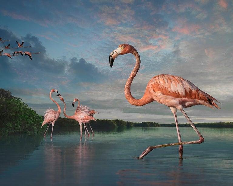 Cheryl Medow Color Photograph - Flamingos at Rio Lagartos