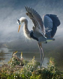 Great Blue Heron With Chicks Revisited S.E.