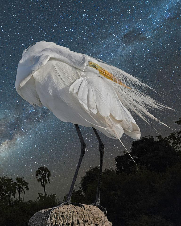 Cheryl Medow Figurative Photograph - Great Egret and the Milky Way