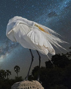 Great Egret and the Milky Way
