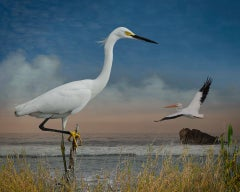 Snowy Egret and a Pelican