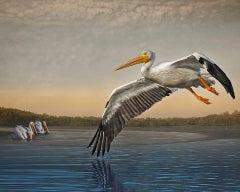 White Pelicans at Dawn