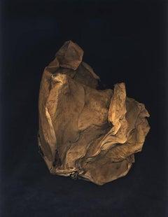 Hamra, spirit leaf series, archival pigment print, ed of 25