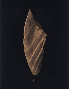 Kemi, spirit leaf series, archival pigment print, ed of 25