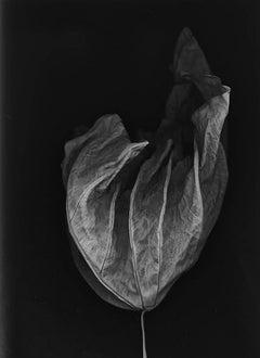 Takelo, spirit leaf series, archival pigment print, ed of 25