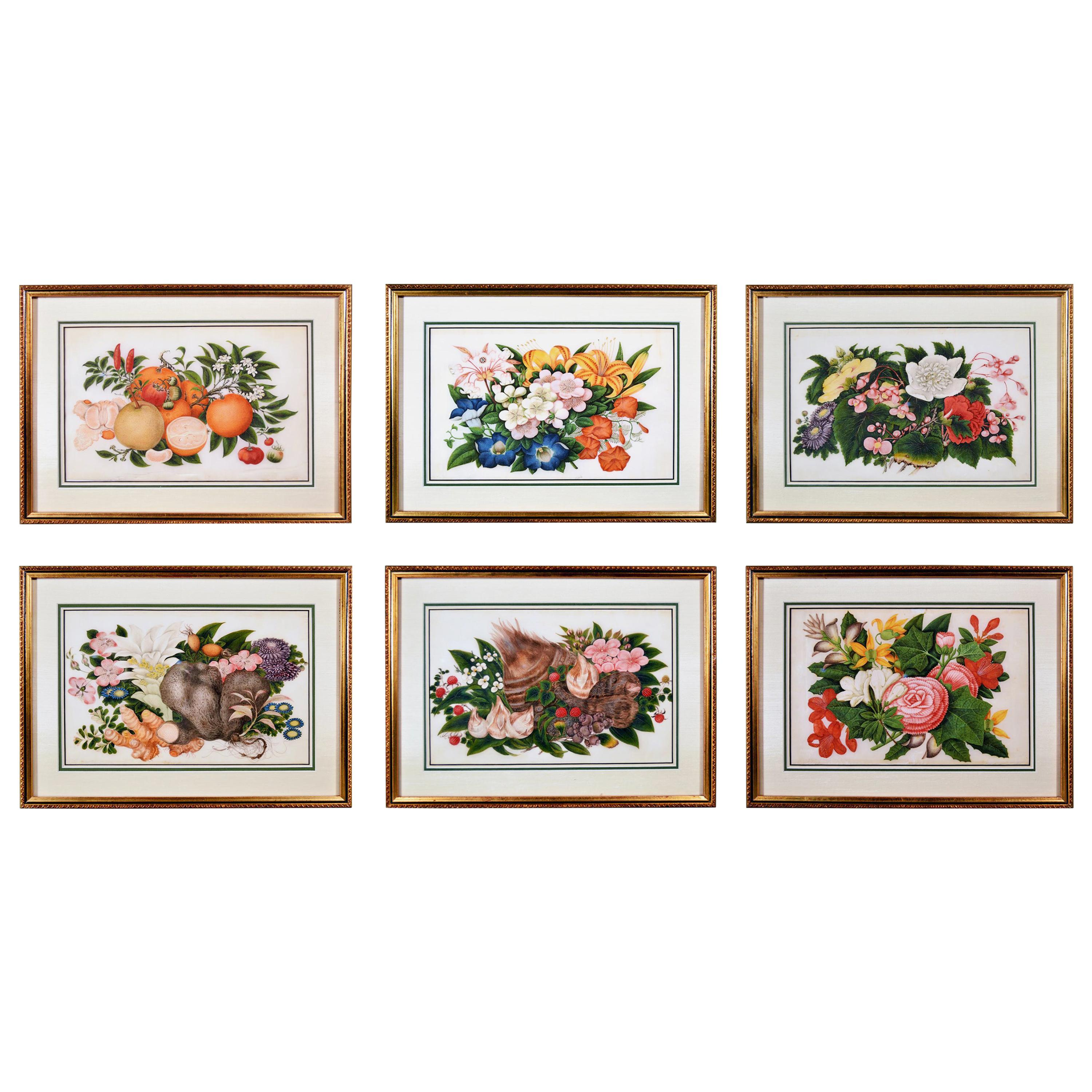 China Trade Set of Six Gouache Still Life of Fruit & Flowers on Pith Paper