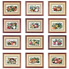 China Trade Watercolor & Gouache Set of Twelve Paintings of Fruit & Flowers