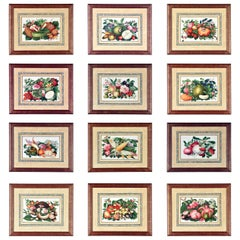 China Trade Watercolor & Gouache Set of Twelve Paintings of Fruit