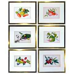 China Trade Watercolor Paintings of Vegetables, Set of Six