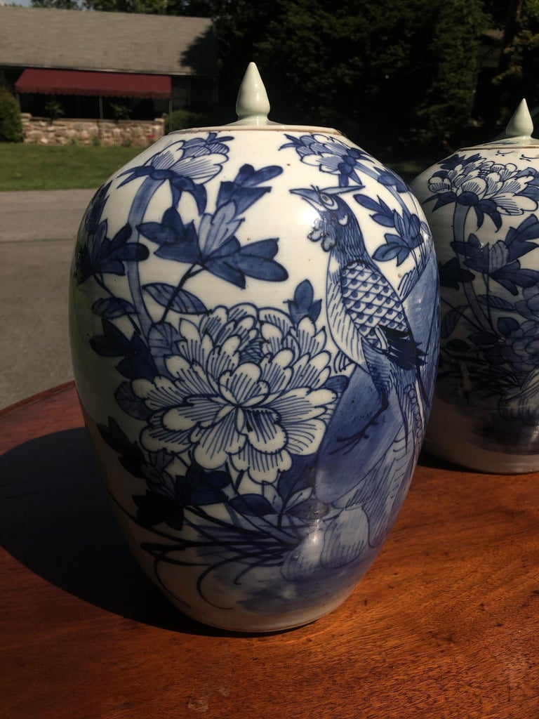 Chinese blue and white porcelain ginger jar 12 inches high with lid, late 19th century Peafowl design great No chips or cracks.