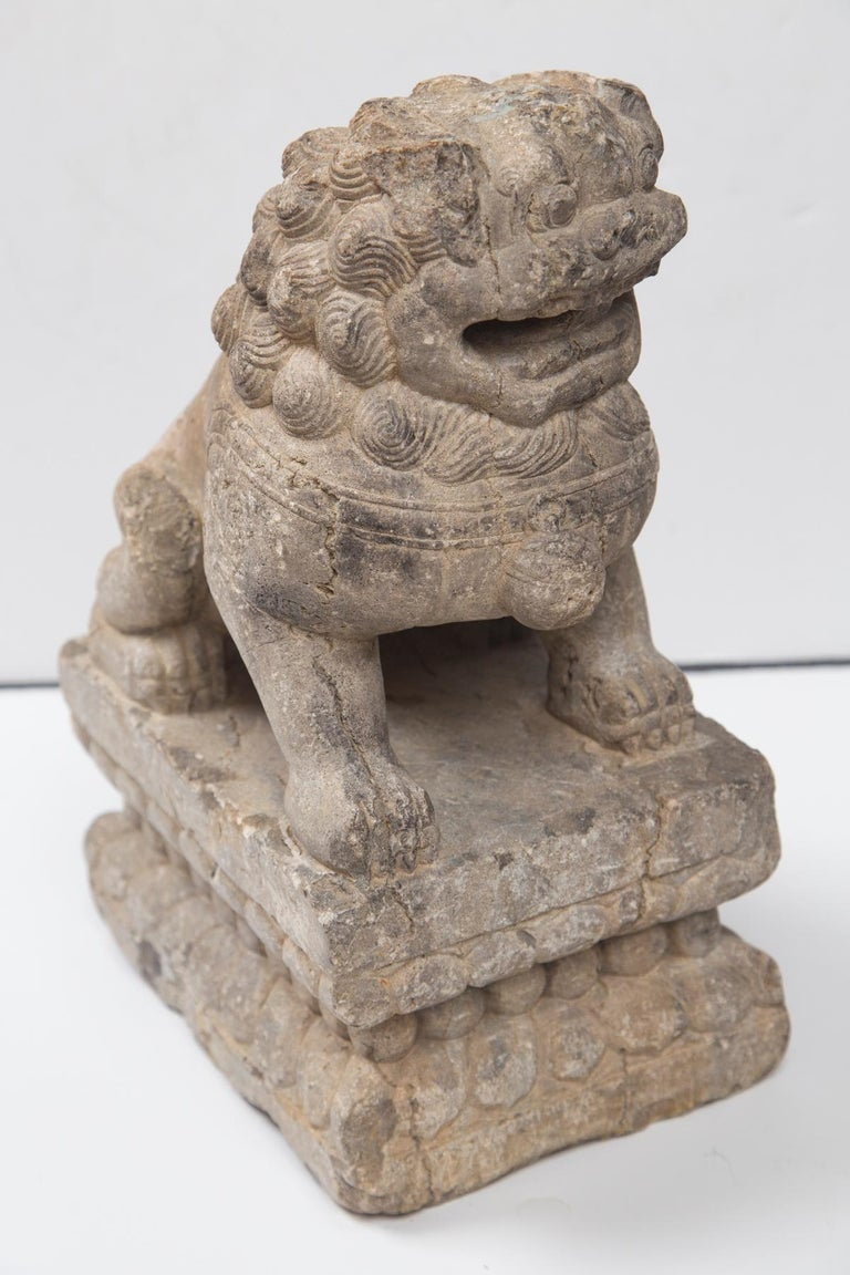 An antique stone temple lion dating from the Ming Dynasty. He sits on his haunches atop a double tiered lotus carved pedestal.